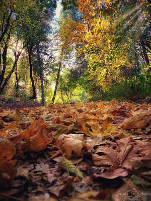 Photograph - Autumn Road by Steph Gabler