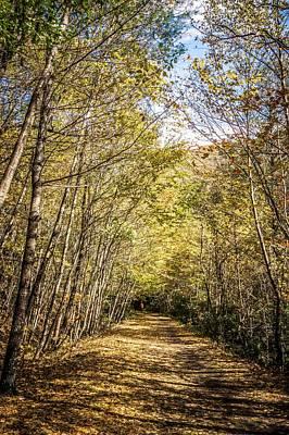 Photograph - Autumn Season Backsgound Autumn Leaves In Park by Alex Grichenko