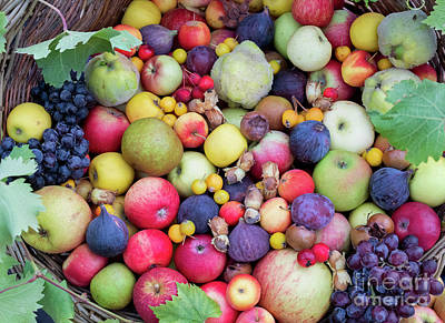 Photograph - Autumn Seasonal Fruit Basket  by Tim Gainey