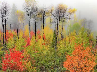 Photograph - Autumn Shades by Leland D Howard