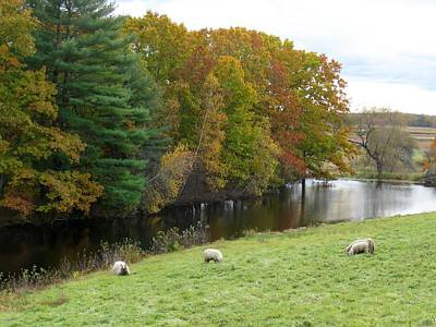 Photograph - Autumn Sheep by Keith Stokes