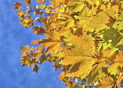 Photograph - Autumn Sky by JAMART Photography