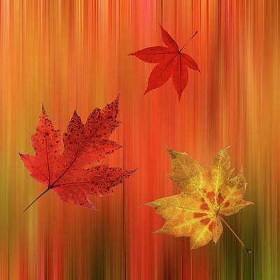 Photograph - Autumn Spirit Square by Gill Billington