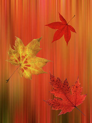 Photograph - Autumn Spirit Vertical by Gill Billington