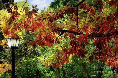Photograph - Autumn Splender by Elaine Manley