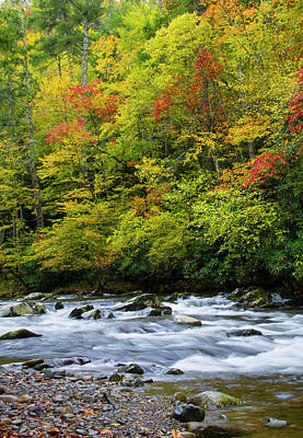 Photograph - Autumn Stream by Larry Bohlin