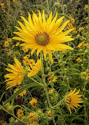 Photograph - Autumn Sunflower by Britt Runyon