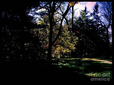 Frank J Casella Royalty-Free and Rights-Managed Images - Autumn Sunlight Through the Trees by Frank J Casella