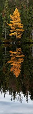 Photograph - Autumn Tamarack  by Doug Gibbons