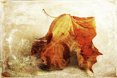 Photograph - Autumn Texture by Randi Grace Nilsberg