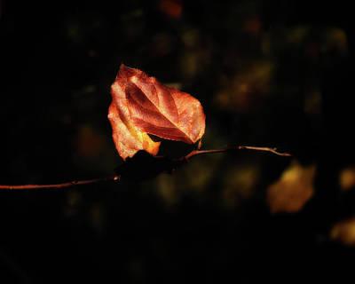 Photograph - Autumn by Thomas Hall