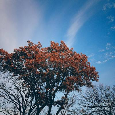 Frank J Casella Royalty-Free and Rights-Managed Images - Autumn Tree and Blue Sky  by Frank J Casella