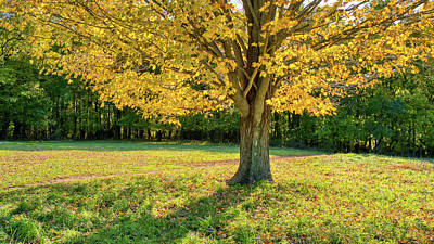 Photograph - Autumn Tree And Shadows In The Park by Gary Slawsky