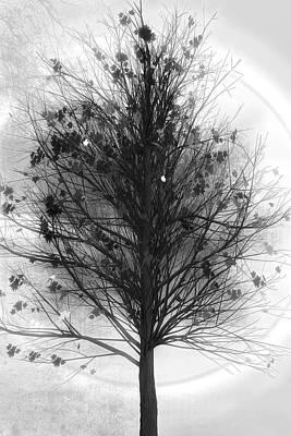 Digital Art - Autumn Tree In Black And White by Debra and Dave Vanderlaan