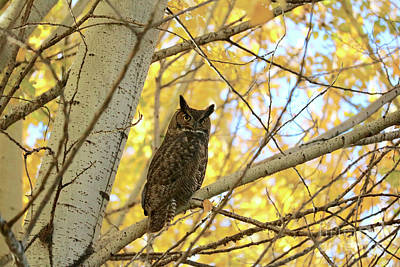 Photograph - Autumn Tree With Owl by Carol Groenen