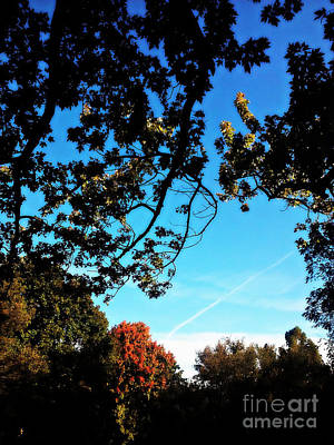 Frank J Casella Royalty-Free and Rights-Managed Images - Autumn Trees Blue Sky by Frank J Casella
