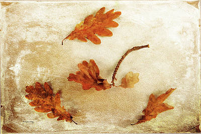 Photograph - Autumn Twist by Randi Grace Nilsberg
