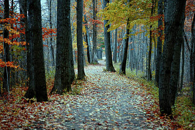 Photograph - Autumn Way by John Meader