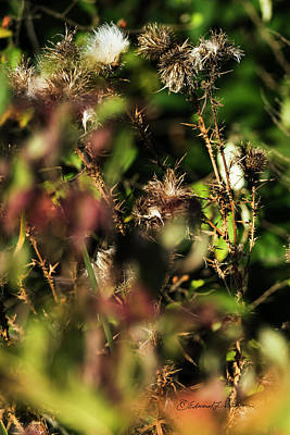 Photograph - Autumn Weeds by Edward Peterson