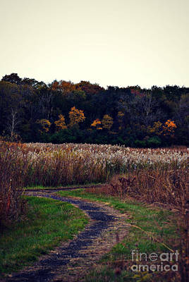 Frank J Casella Royalty-Free and Rights-Managed Images - Autumn Wetlands by Frank J Casella