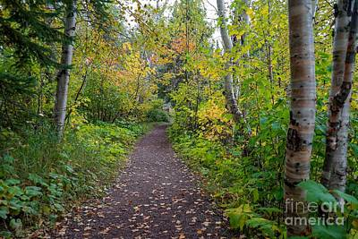 Photograph - Autumn Woods by Susan Rydberg