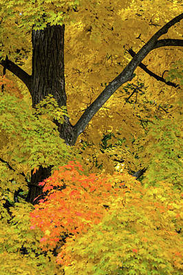 Photograph - Autumn Yellows by Stewart Helberg