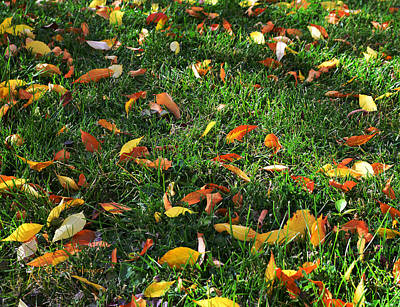 Photograph - Autumn's Confetti by Kae Cheatham