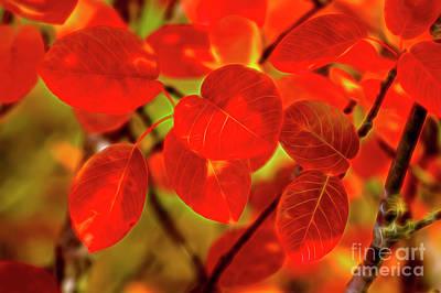 Digital Art Royalty Free Images - Autumns glow Royalty-Free Image by Veikko Suikkanen