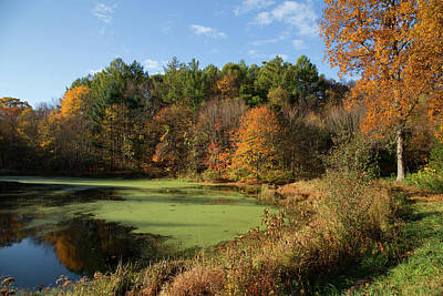 Photograph - Autumns Pond by Karol Livote