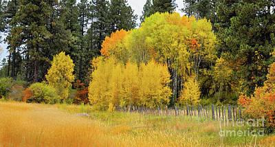 Photograph - Autumn's Splendor by Susan Warren