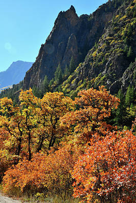 Photograph - Avalanche Creek Road Fall Colored Oaks by Ray Mathis