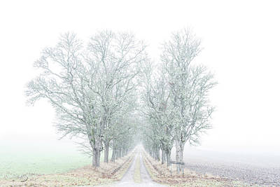 Crazy Cartoon Creatures - Avenue of maple trees in fog by Torbjorn Swenelius