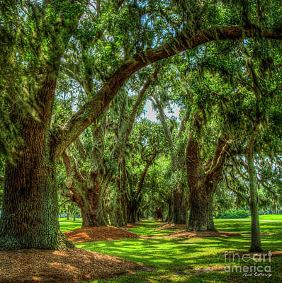 Animal Watercolors Juan Bosco Royalty Free Images - Avenue Of Oaks 7 Sea Island Golf Club St Simons Island Georgia Art Royalty-Free Image by Reid Callaway