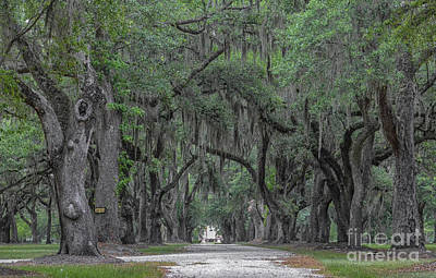 Photograph - Avenue Of Oaks - Fenwick Hall by Dale Powell