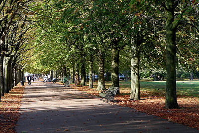 Photograph - Avenue Of Trees At Greenwich Park by Aidan Moran