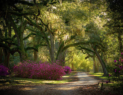 Photograph - Avery Island Pathway by Jean Noren