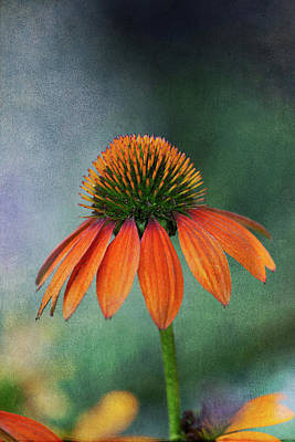 Photograph - Awaiting  Pollination by Dale Kincaid