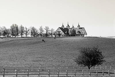 Photograph - B And W 2 Horse Farm by Jack R Perry