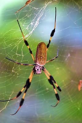 Photograph - B-b-b-big Spider by William Tasker
