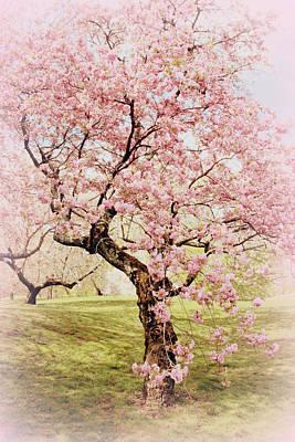 Photograph - Softly Cherry by Jessica Jenney
