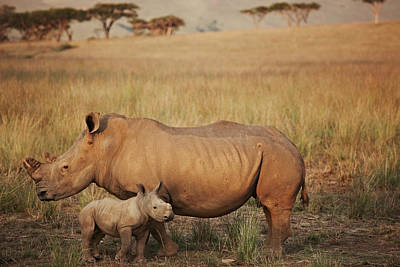 Animal Family Photograph - Baby And Mummy Rhino by Niels Busch