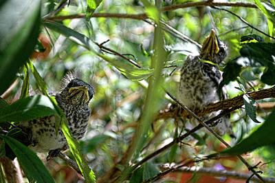Holiday Pillows 2019 - Baby Birds Hiding out by Jason Bohannon
