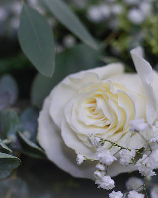 Olympic Sports - Baby Breath and White Rose Close Up by Brenda Landdeck