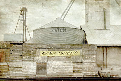 Digital Art - Baby Chicks Feed And Seed Store by Ramona Murdock