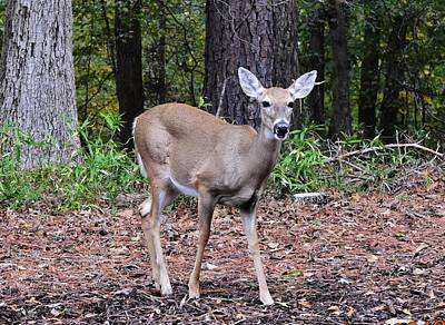Photograph - Baby Doe by Eileen Brymer