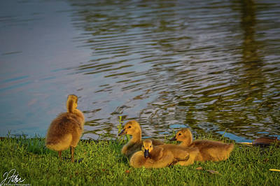 Wall Art - Photograph - Baby Duckling At The Waters Edge by James Fisher