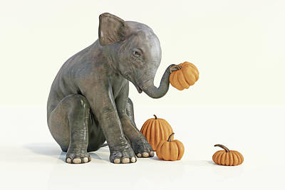 Digital Art Rights Managed Images - Baby Elephant and Pumpkins Royalty-Free Image by Betsy Knapp