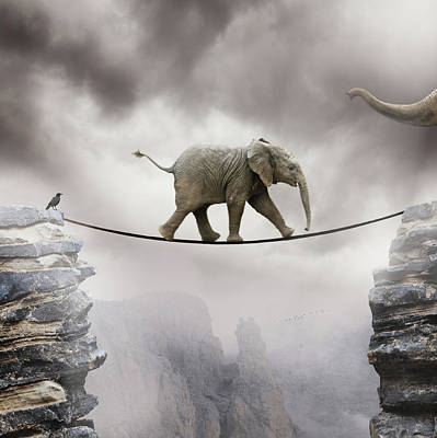 Balance Photograph - Baby Elephant by By Sigi Kolbe