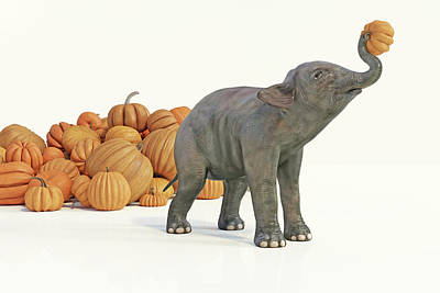 Digital Art Rights Managed Images - Baby Elephant Selects Pumpkin Royalty-Free Image by Betsy Knapp