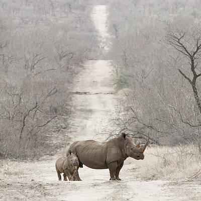 Animal Family Photograph - Baby Rhino With Mother by Anne Makaske